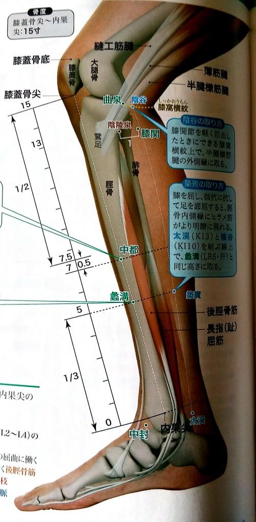 ぎっくり股関節のツボ肝経・曲泉の画像
