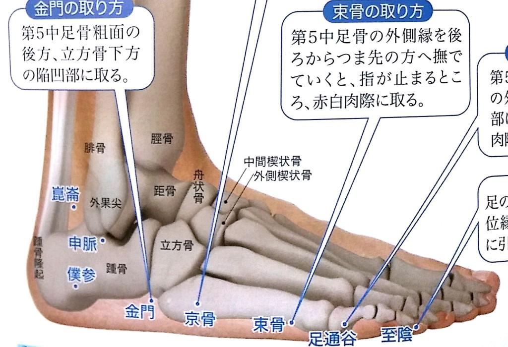 尾骨の痛みツボ膀胱経・京骨