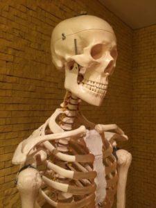 肋骨を広げるイメージ画像