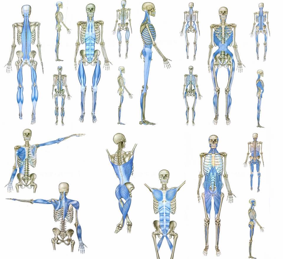 筋膜整体とは?