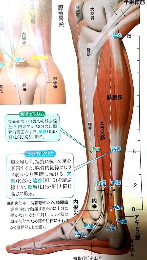 骨盤矯正のツボ腎経太谿