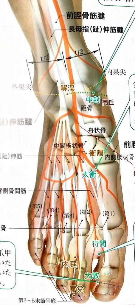 骨盤矯正のツボ肝経太衝