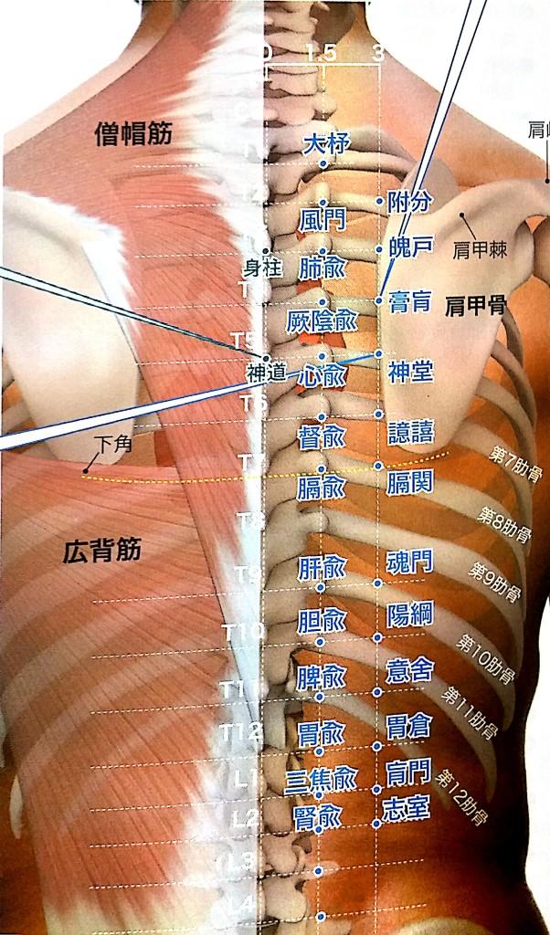 変形性股関節症 ツボ