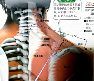肩甲骨の歪み矯正ツボ