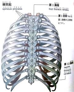 肋骨矯正 画像