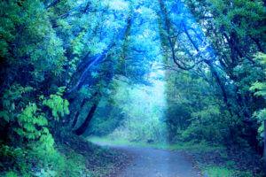 自然の写真